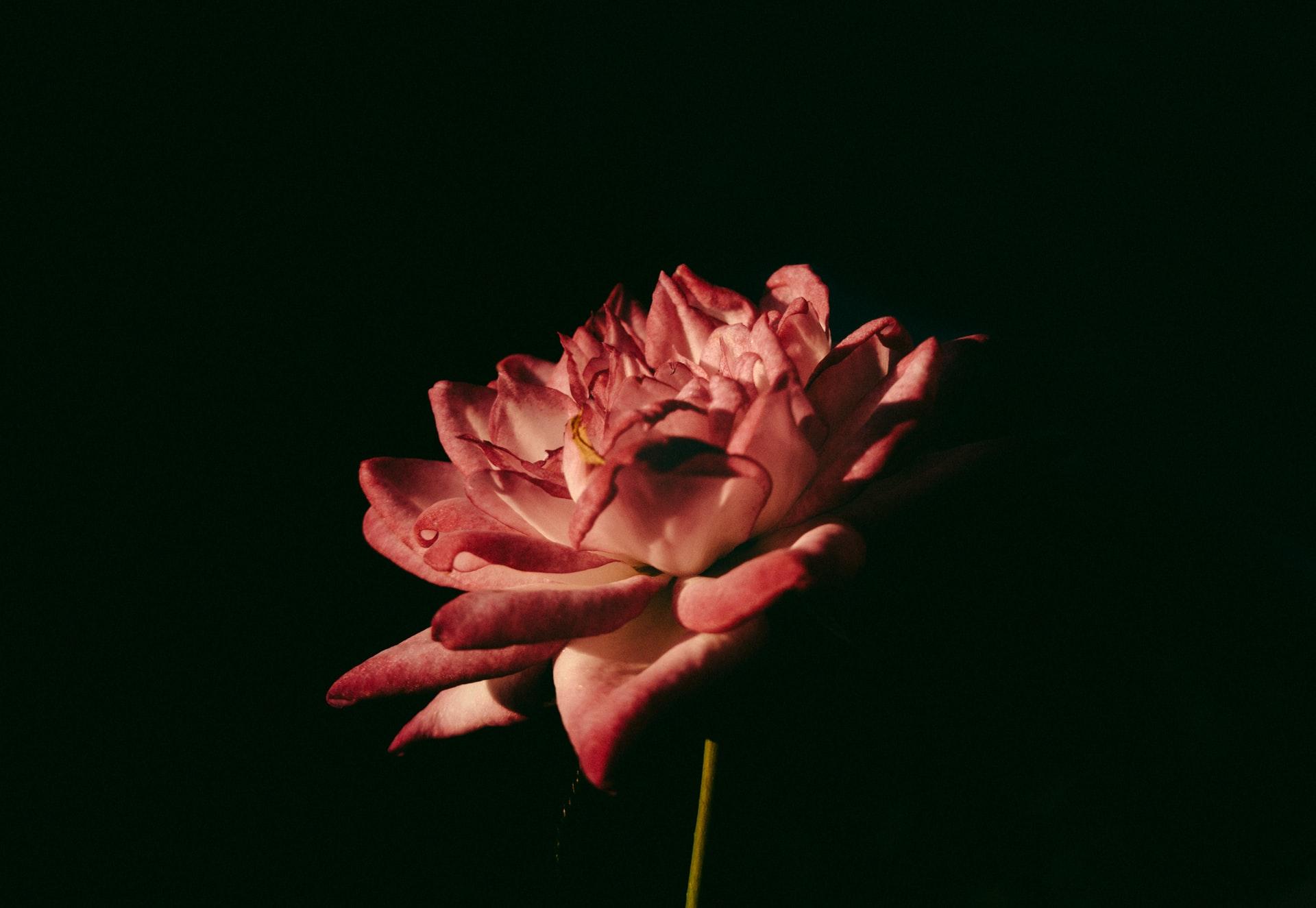 +9 Poemas del Duque de Rivas ¡Amor y tragedia!